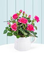 Spring Rose Jug - Now 25